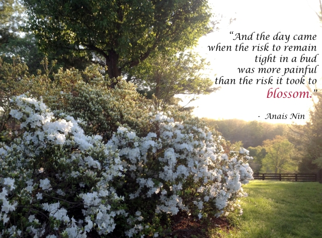 Risk to blossom