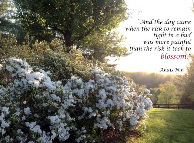 Risk to blossom
